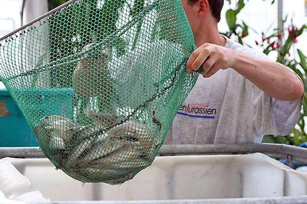 Fischzucht der Basis57